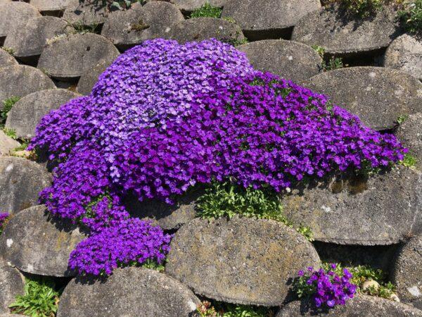 Natur in Uster im Frühling