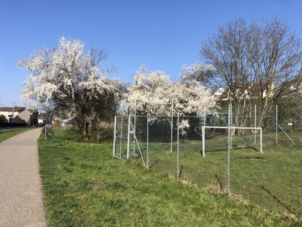 Uster im Frühling